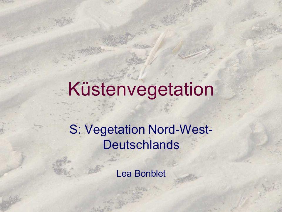 Küstenvegetation S: Vegetation Nord-West- Deutschlands Lea Bonblet