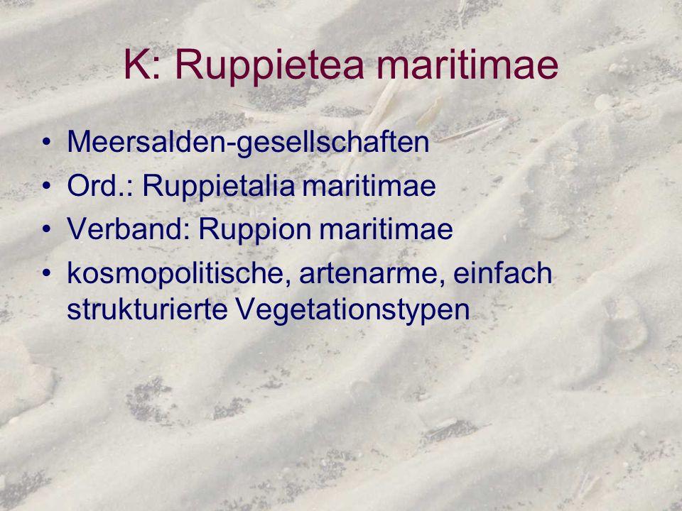K: Ruppietea maritimae Meersalden-gesellschaften Ord.: Ruppietalia maritimae Verband: Ruppion maritimae kosmopolitische, artenarme, einfach strukturie