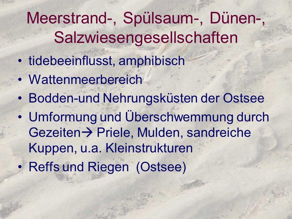 Meerstrand-, Spülsaum-, Dünen-, Salzwiesengesellschaften tidebeeinflusst, amphibisch Wattenmeerbereich Bodden-und Nehrungsküsten der Ostsee Umformung