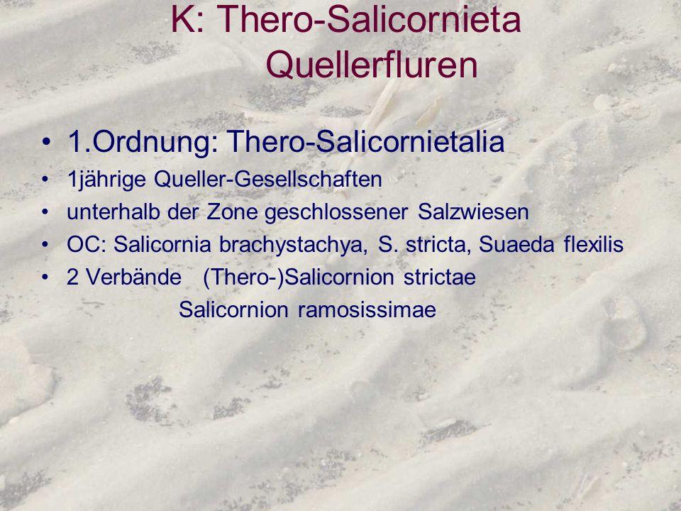 K: Thero-Salicornieta Quellerfluren 1.Ordnung: Thero-Salicornietalia 1jährige Queller-Gesellschaften unterhalb der Zone geschlossener Salzwiesen OC: S