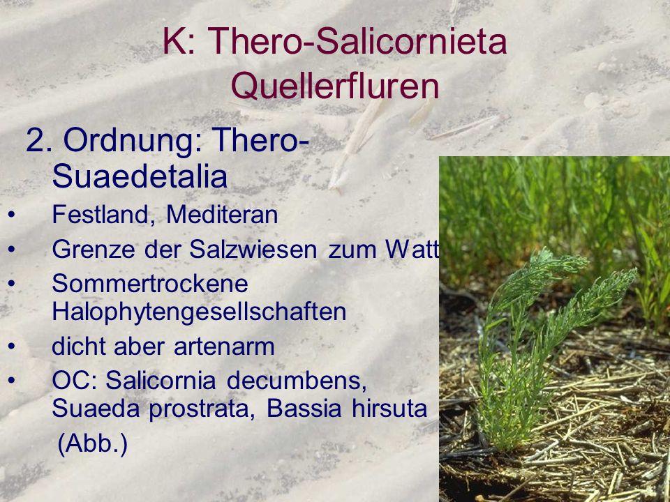 K: Thero-Salicornieta Quellerfluren 2. Ordnung: Thero- Suaedetalia Festland, Mediteran Grenze der Salzwiesen zum Watt Sommertrockene Halophytengesells