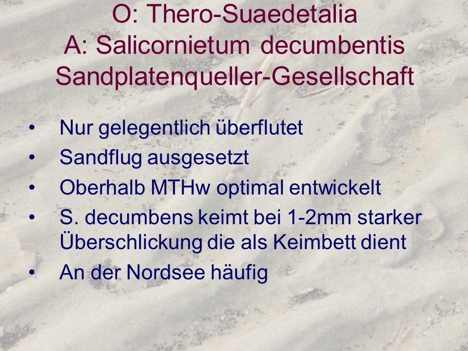 O: Thero-Suaedetalia A: Salicornietum decumbentis Sandplatenqueller-Gesellschaft Nur gelegentlich überflutet Sandflug ausgesetzt Oberhalb MTHw optimal