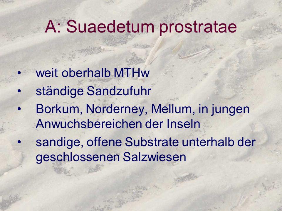 A: Suaedetum prostratae weit oberhalb MTHw ständige Sandzufuhr Borkum, Norderney, Mellum, in jungen Anwuchsbereichen der Inseln sandige, offene Substr