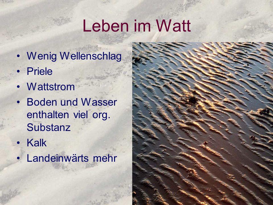Leben im Watt Wenig Wellenschlag Priele Wattstrom Boden und Wasser enthalten viel org. Substanz Kalk Landeinwärts mehr