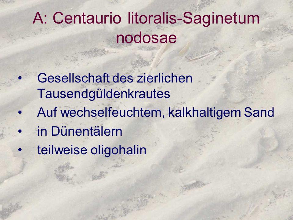 A: Centaurio litoralis-Saginetum nodosae Gesellschaft des zierlichen Tausendgüldenkrautes Auf wechselfeuchtem, kalkhaltigem Sand in Dünentälern teilwe