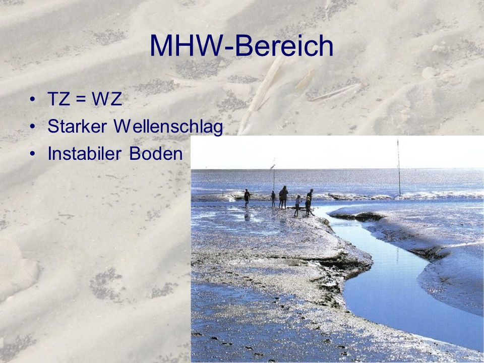K: Spartinetea maritimae Schlickgrasfluren Ordnung: Spartinetalia maritimae Verband: Spartinion maritimae Salzwiesen auf Inseln über Schlickböden Von 20cm über MTHw bis 30cm unter MTHw