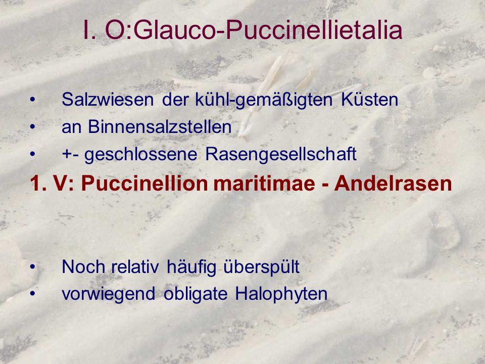 I. O:Glauco-Puccinellietalia Salzwiesen der kühl-gemäßigten Küsten an Binnensalzstellen +- geschlossene Rasengesellschaft 1. V: Puccinellion maritimae