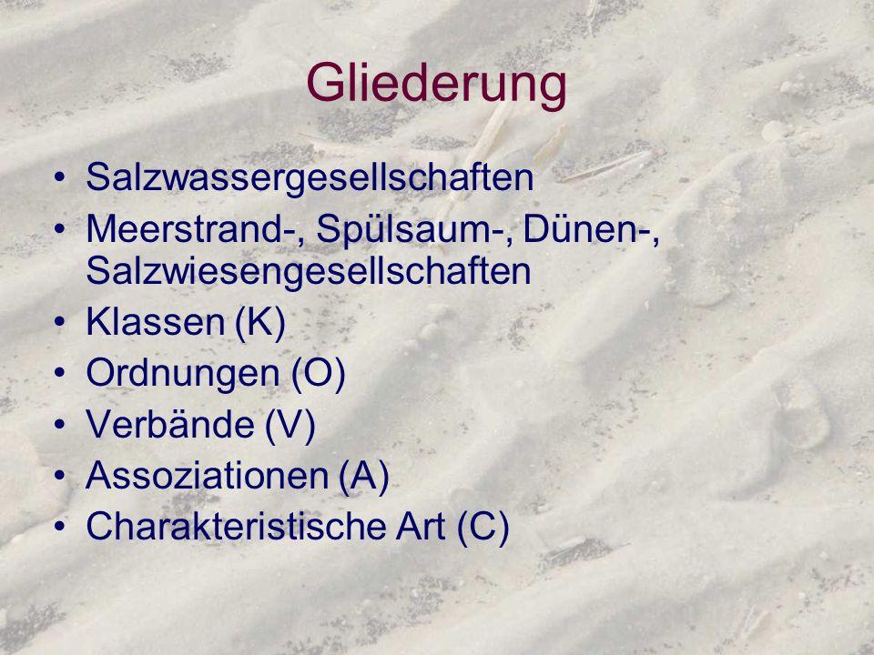 Gliederung Salzwassergesellschaften Meerstrand-, Spülsaum-, Dünen-, Salzwiesengesellschaften Klassen (K) Ordnungen (O) Verbände (V) Assoziationen (A)