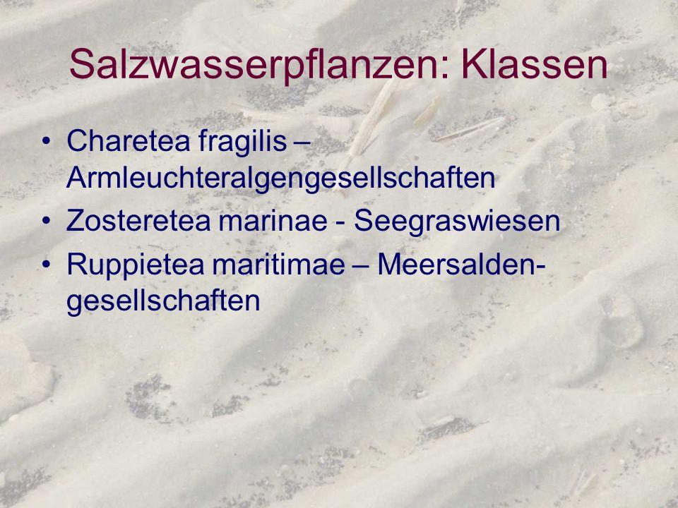 Salzwasserpflanzen: Klassen Charetea fragilis – Armleuchteralgengesellschaften Zosteretea marinae - Seegraswiesen Ruppietea maritimae – Meersalden- ge