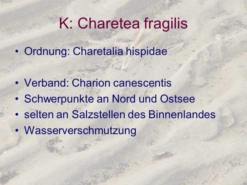 K: Charetea fragilis Ordnung: Charetalia hispidae Verband: Charion canescentis Schwerpunkte an Nord und Ostsee selten an Salzstellen des Binnenlandes