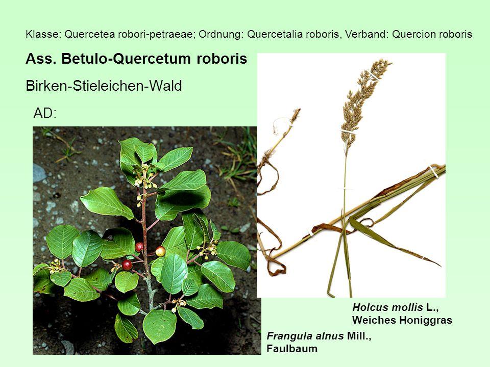 Klasse: Quercetea robori-petraeae; Ordnung: Quercetalia roboris, Verband: Quercion roboris Ass.