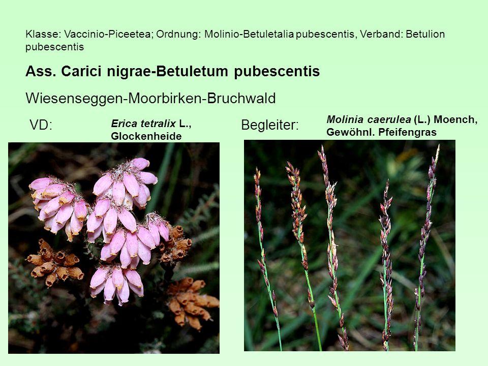 Klasse: Vaccinio-Piceetea; Ordnung: Molinio-Betuletalia pubescentis, Verband: Betulion pubescentis Ass.
