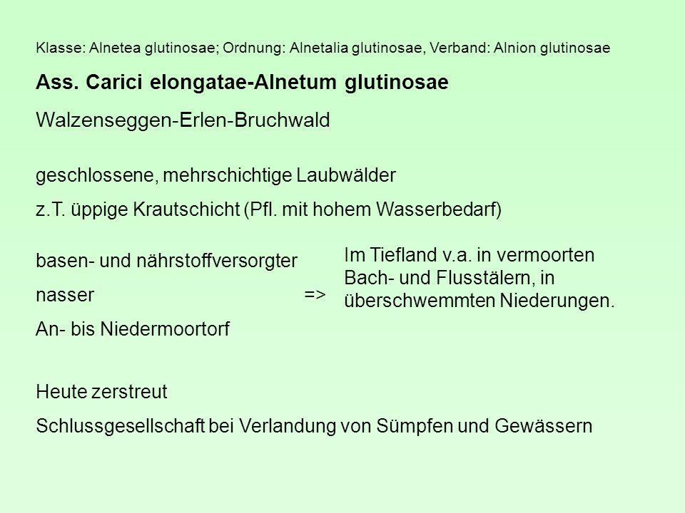 Klasse: Alnetea glutinosae; Ordnung: Alnetalia glutinosae, Verband: Alnion glutinosae Ass.
