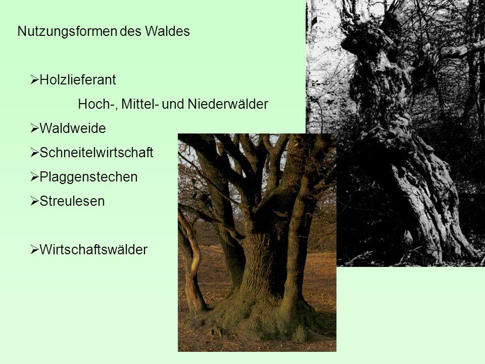 Nutzungsformen des Waldes Holzlieferant Hoch-, Mittel- und Niederwälder Waldweide Schneitelwirtschaft Plaggenstechen Streulesen Wirtschaftswälder