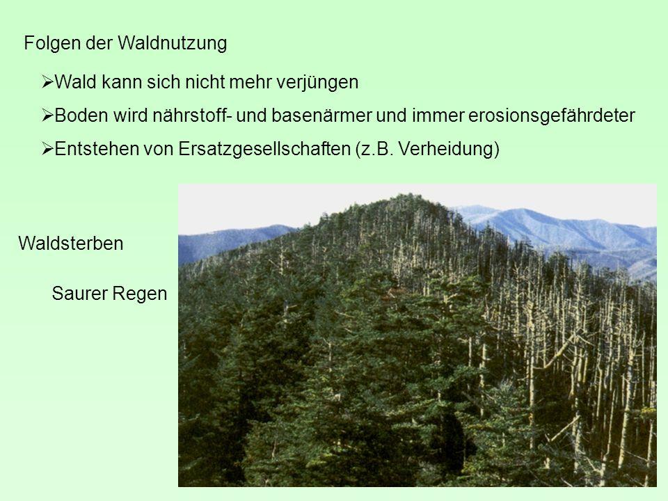 Waldsterben Folgen der Waldnutzung Wald kann sich nicht mehr verjüngen Boden wird nährstoff- und basenärmer und immer erosionsgefährdeter Entstehen von Ersatzgesellschaften (z.B.