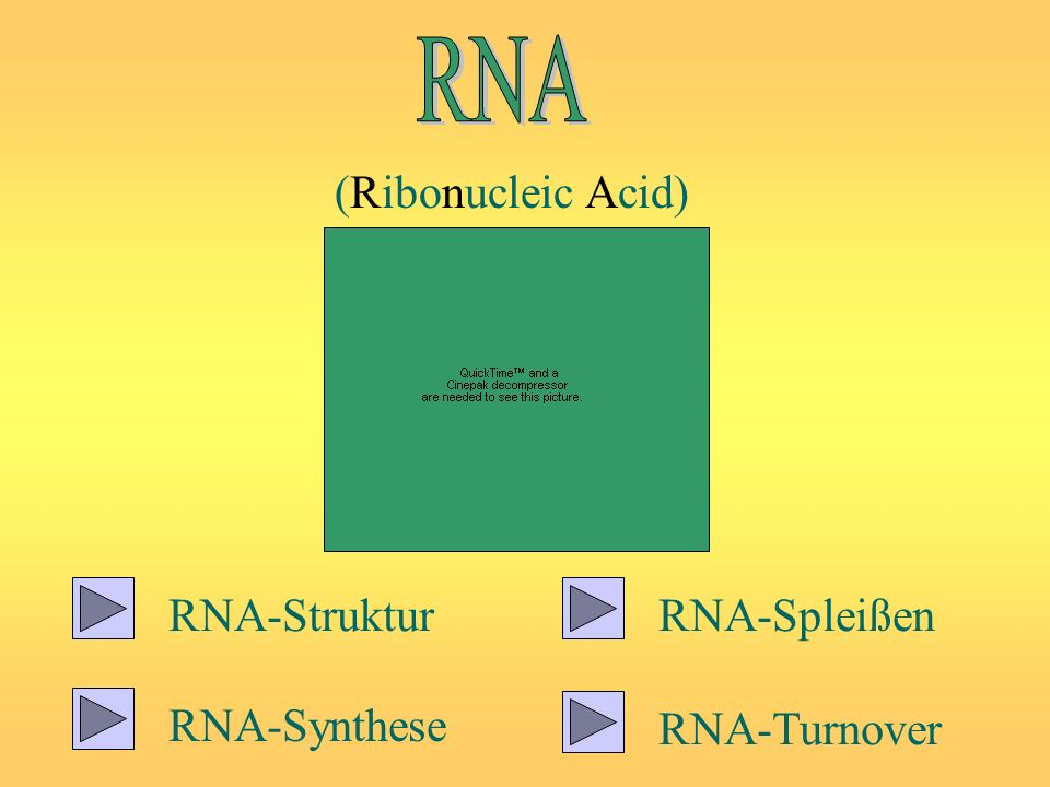 (Ribonucleic Acid) RNA-Struktur RNA-Synthese RNA-Spleißen RNA-Turnover