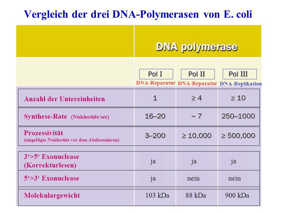 Vergleich der drei DNA-Polymerasen von E. coli Anzahl der Untereinheiten Synthese-Rate (Nukleotide/sec) Prozessivität (eingefügte Nukleotide vor dem A