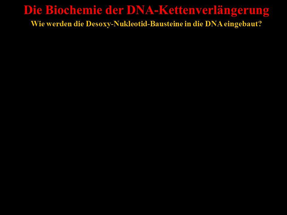 Die Biochemie der DNA-Kettenverlängerung Wie werden die Desoxy-Nukleotid-Bausteine in die DNA eingebaut?