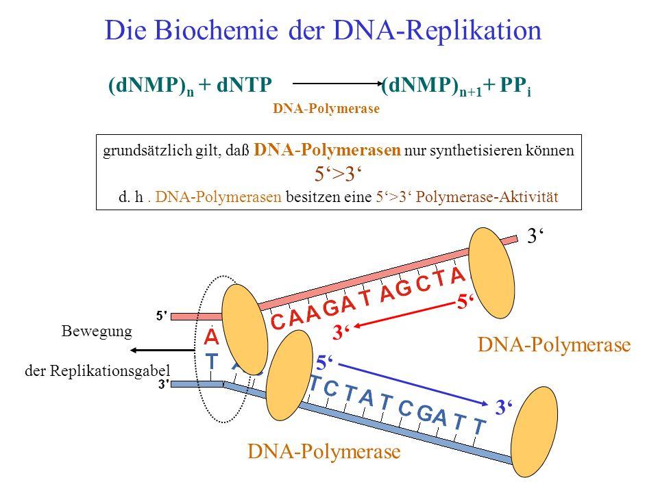 (dNMP) n + dNTP (dNMP) n+1 + PP i DNA-Polymerase grundsätzlich gilt, daß DNA-Polymerasen nur synthetisieren können 5>3 d. h. DNA-Polymerasen besitzen