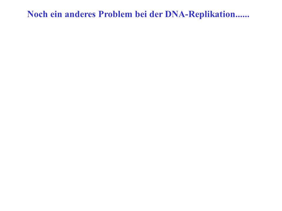 Noch ein anderes Problem bei der DNA-Replikation......