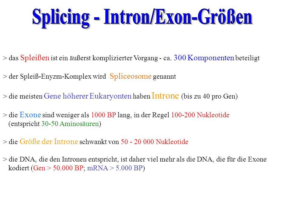 > das Spleißen ist ein äußerst komplizierter Vorgang - ca. 300 Komponenten beteiligt > der Spleiß-Enyzm-Komplex wird Spliceosome genannt > die meisten