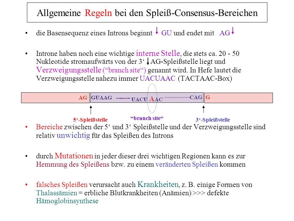 die Basensequenz eines Introns beginnt GU und endet mit AG Introne haben noch eine wichtige interne Stelle, die stets ca. 20 - 50 Nukleotide stromaufw