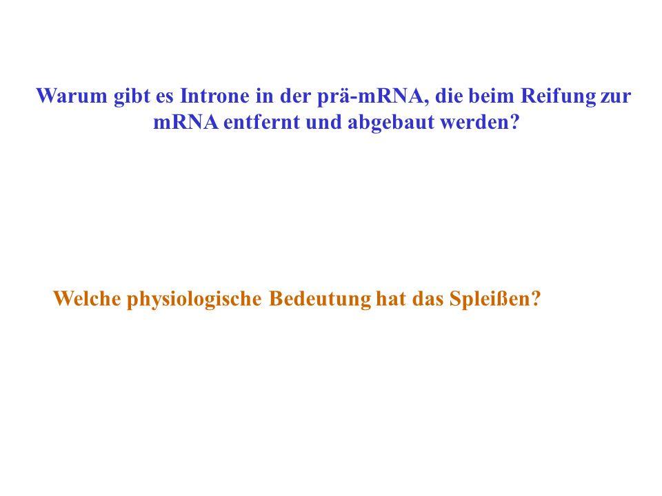 Welche physiologische Bedeutung hat das Spleißen? Warum gibt es Introne in der prä-mRNA, die beim Reifung zur mRNA entfernt und abgebaut werden?