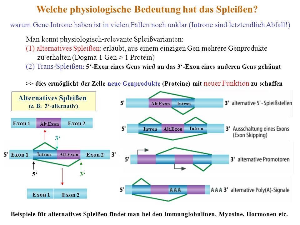 warum Gene Introne haben ist in vielen Fällen noch unklar (Introne sind letztendlich Abfall!) Welche physiologische Bedeutung hat das Spleißen? Man ke