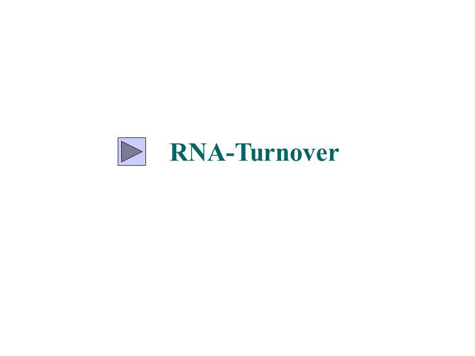 die Entfernung des Introns aus der Prä-mRNA muß äußerst präzise ablaufen, damit die reife mRNA korrekt für das entsprechende Protein kodiert die Präzision muß auf ein Nukleotid genau sein (molekulares Skalpell) prä-mRNA mRNA Korrekt gespleißt mRNA falsch gespleißt fehlerhaftes Spleißen > frameshift Mutation >andere Aminosäuresequenz korrektes Spleißen