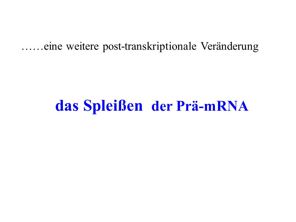 Die Entdeckung des Spleiß-Phänomens bis 1977 hatte man die Vorstellung, daß die DNA-Sequenz eines Gens co-linear mit der Aminosäure-Sequenz ist als man aber die reife mRNA von bestimmten Genen isolierte (polyU-Affinitätschromato- graphie) und mit der entsprechenden DNA-Matritze hybridisierte und die DNA::RNA- Hybride im Elektronenmikroskop sichtbar machte, gab es eine unerwartete Entdeckung >>>> die gereinigte mRNA war viel kürzer als die DNA-Matritze Intron Exon TACGGATCGTA ACAGTAGGCTATAAC AUGCCUAGCAU-UGUCAUCCGAUAUUG NNNNCTANNNNCTA NNNNCTANNNNCTA NNN N