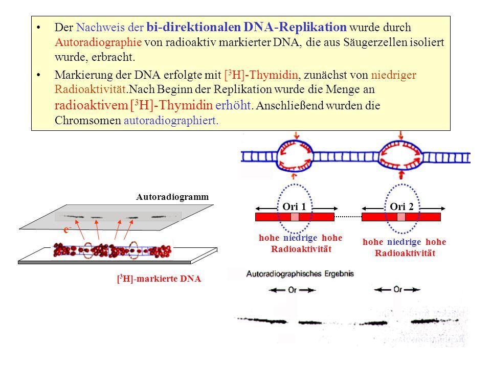 Der Nachweis der bi-direktionalen DNA-Replikation wurde durch Autoradiographie von radioaktiv markierter DNA, die aus Säugerzellen isoliert wurde, erb