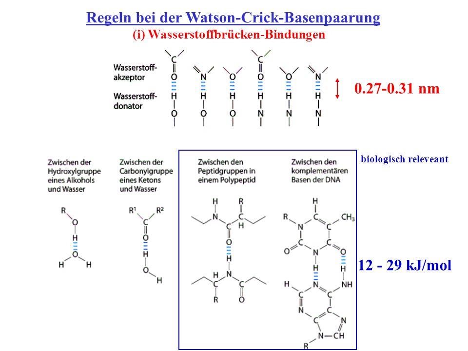 Regeln bei der Watson-Crick-Basenpaarung (i) Wasserstoffbrücken-Bindungen 0.27-0.31 nm 12 - 29 kJ/mol biologisch releveant
