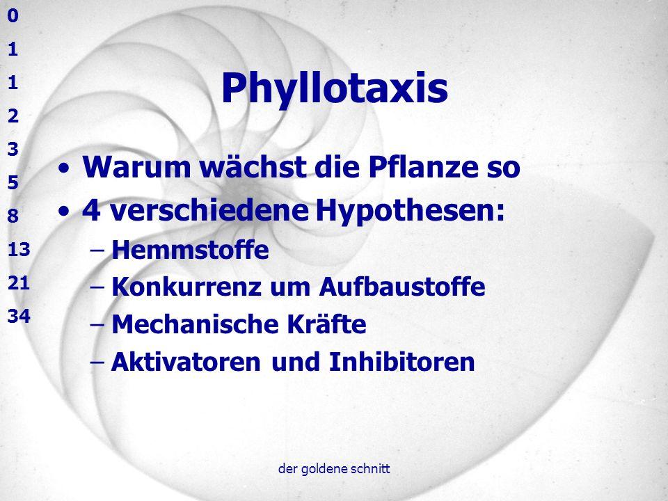 der goldene schnitt Phyllotaxis Warum wächst die Pflanze so 4 verschiedene Hypothesen: –Hemmstoffe –Konkurrenz um Aufbaustoffe –Mechanische Kräfte –Ak