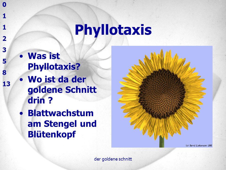 der goldene schnitt Phyllotaxis Was ist Phyllotaxis? Wo ist da der goldene Schnitt drin ? Blattwachstum am Stengel und Blütenkopf 0 1 2 3 5 8 13