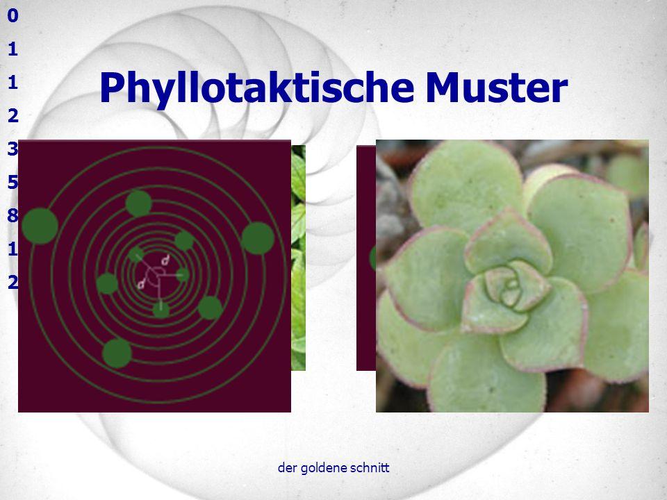 der goldene schnitt Phyllotaxis Warum wächst die Pflanze so 4 verschiedene Hypothesen: –Hemmstoffe –Konkurrenz um Aufbaustoffe –Mechanische Kräfte –Aktivatoren und Inhibitoren 0 1 2 3 5 8 13 21 34