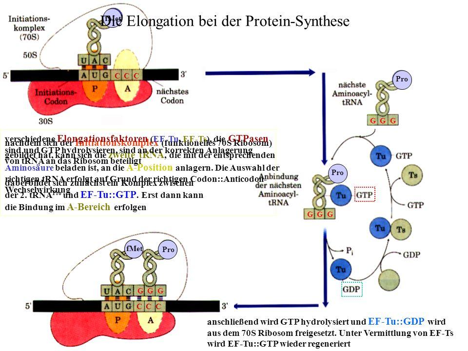 fMet C C C Pro G G G Die Elongation bei der Protein-Synthese fMet G G G C C C Pro nachdem sich der Initiationskomplex (funktionelles 70S Ribosom) gebi