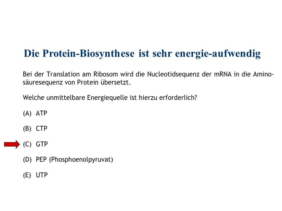 Die Protein-Biosynthese ist sehr energie-aufwendig > Bildung der Aminoacyl-tRNA= 2 ATP > Elongation= 1 GTP > Translokation= 1 GTP ____________________