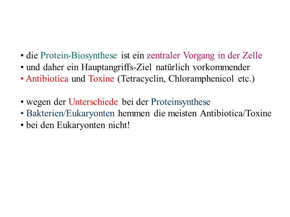 die Protein-Biosynthese ist ein zentraler Vorgang in der Zelle und daher ein Hauptangriffs-Ziel natürlich vorkommender Antibiotica und Toxine (Tetracy
