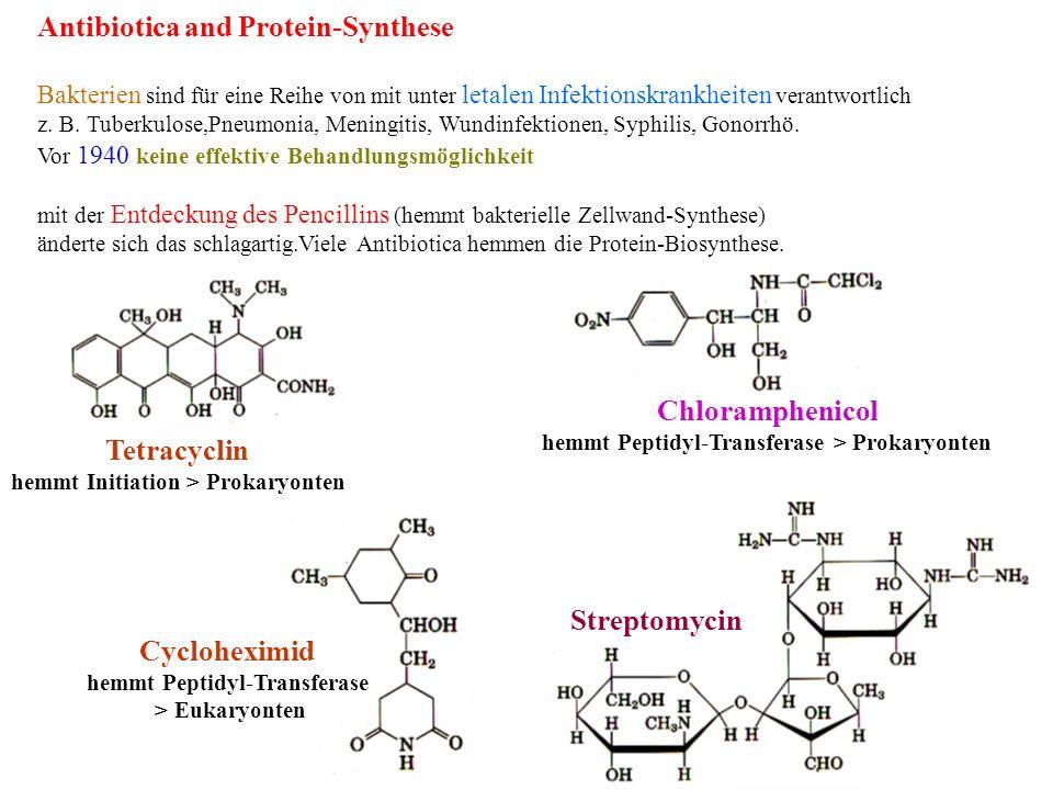 Tetracyclin hemmt Initiation > Prokaryonten Chloramphenicol hemmt Peptidyl-Transferase > Prokaryonten Cycloheximid hemmt Peptidyl-Transferase > Eukary