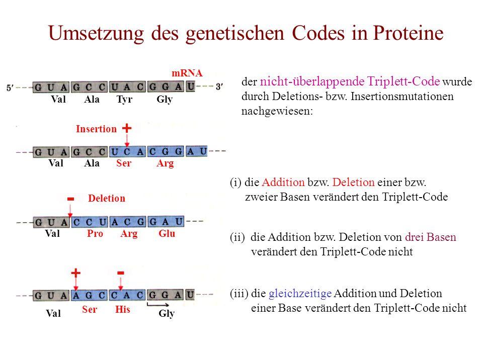 Umsetzung des genetischen Codes in Proteine TyrAlaValGly Val SerHis mRNA SerAlaValArg Insertion ProValArgGlu Deletion der nicht-überlappende Triplett-