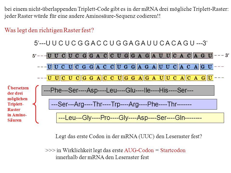 bei einem nicht-überlappenden Triplett-Code gibt es in der mRNA drei mögliche Triplett-Raster: jeder Raster würde für eine andere Aminosäure-Sequenz c