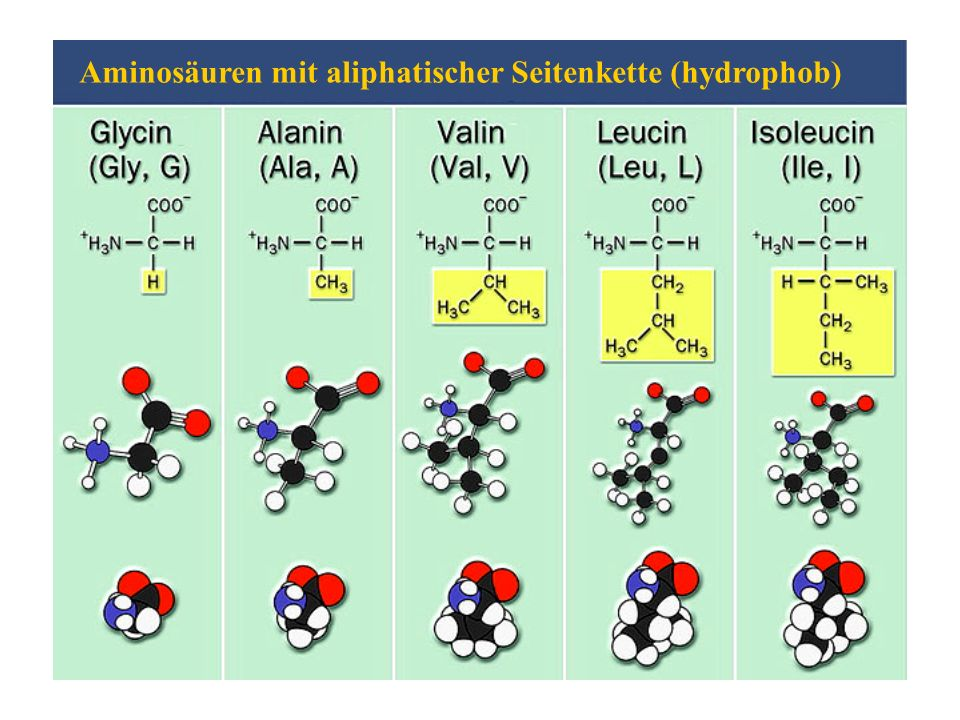 Aminosäuren mit aliphatischer Seitenkette (hydrophob)