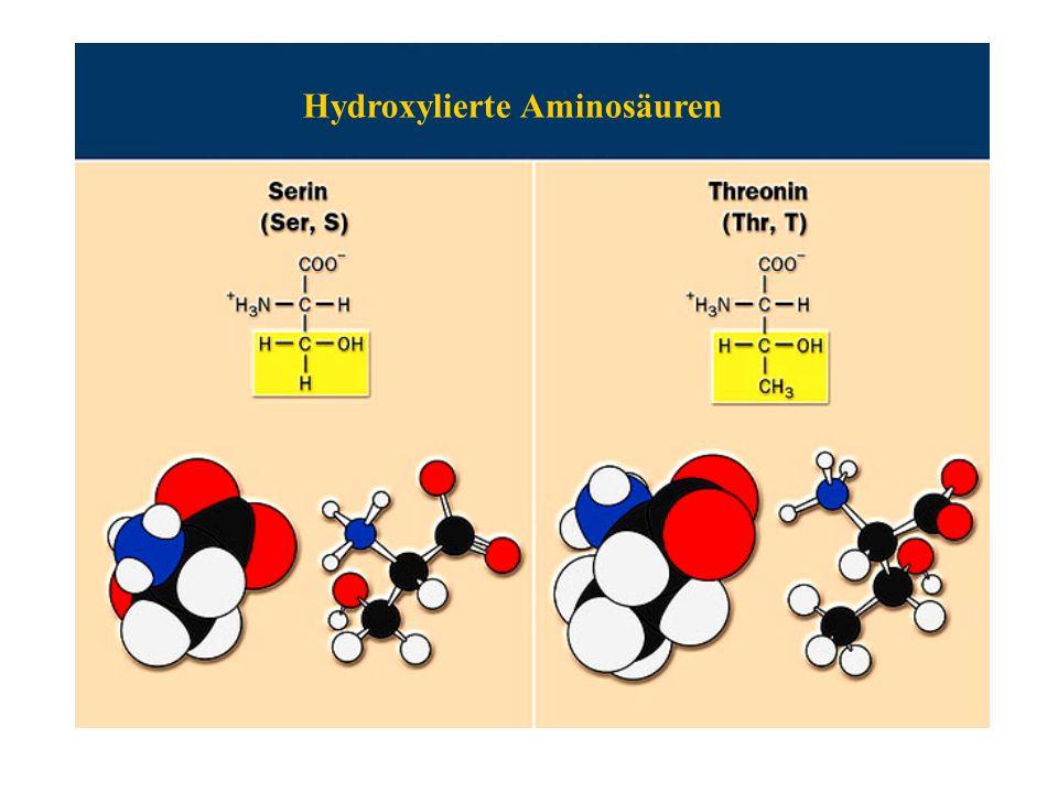 Hydroxylierte Aminosäuren