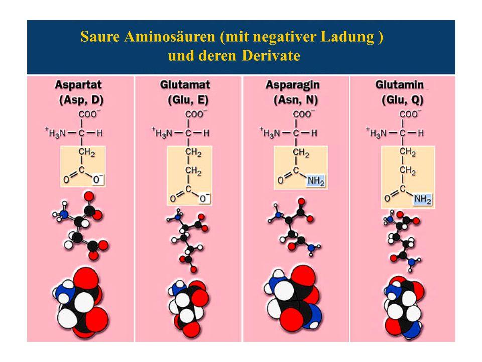 Saure Aminosäuren (mit negativer Ladung ) und deren Derivate