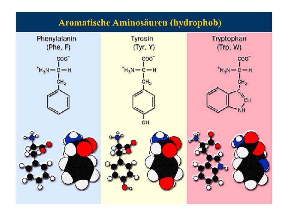 Aromatische Aminosäuren (hydrophob)