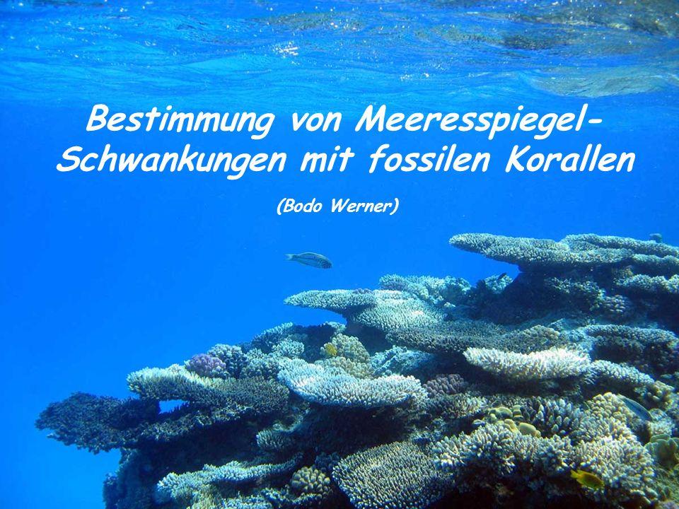 Bestimmung von Meeresspiegel- Schwankungen mit fossilen Korallen (Bodo Werner)