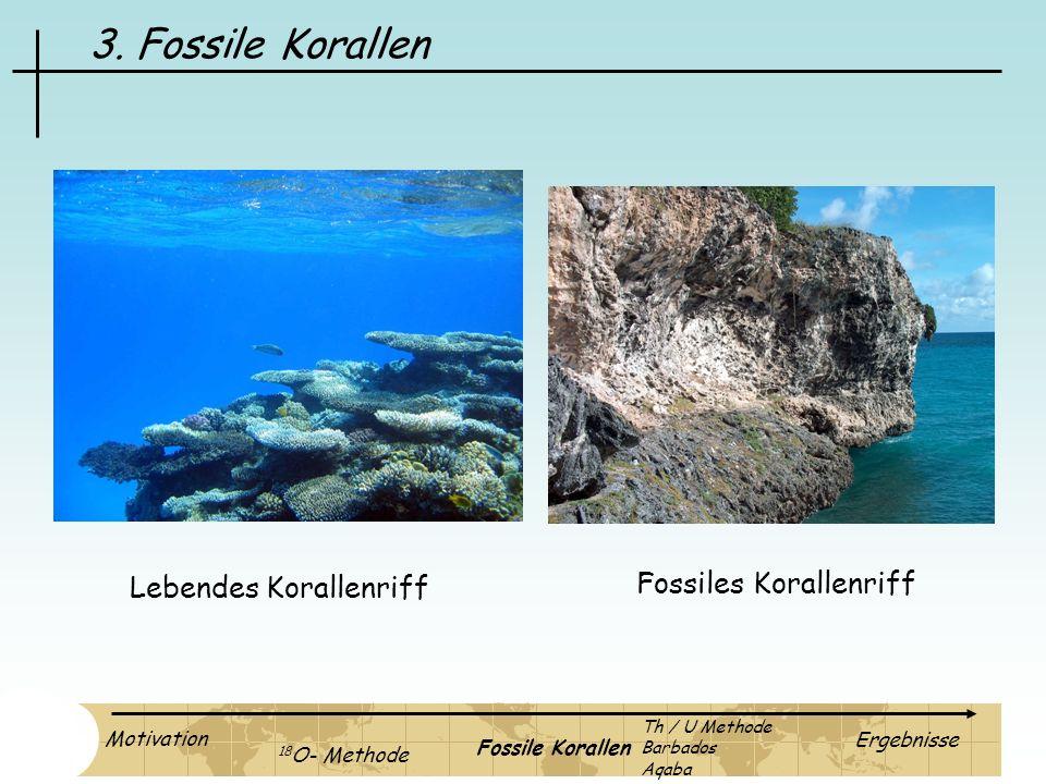 3. Fossile Korallen Fossiles Korallenriff Lebendes Korallenriff Motivation 18 O- Methode Fossile Korallen Ergebnisse Th / U Methode Barbados Aqaba