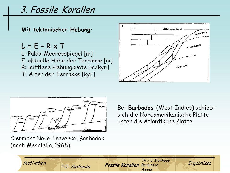 3. Fossile Korallen L = E – R x T L: Paläo-Meeresspiegel [m] E. aktuelle Höhe der Terrasse [m] R: mittlere Hebungsrate [m/kyr] T: Alter der Terrasse [