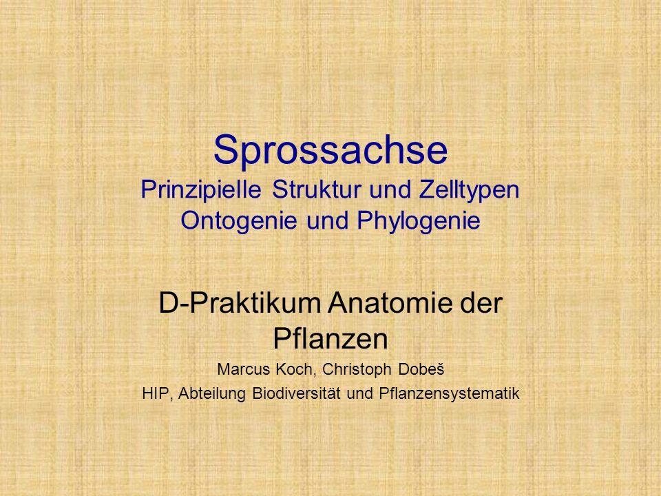 Sprossachse Prinzipielle Struktur und Zelltypen Ontogenie und Phylogenie D-Praktikum Anatomie der Pflanzen Marcus Koch, Christoph Dobeš HIP, Abteilung