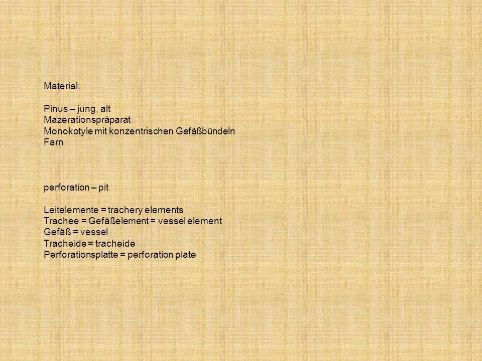 Material: Pinus – jung, alt Mazerationspräparat Monokotyle mit konzentrischen Gefäßbündeln Farn perforation – pit Leitelemente = trachery elements Tra